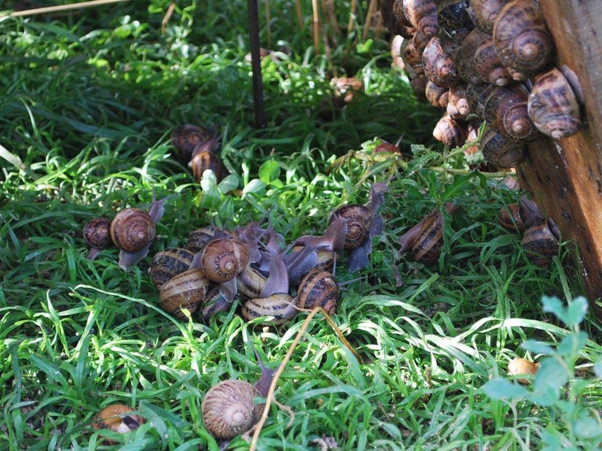 Héliciculteur Les escargots de la Colme