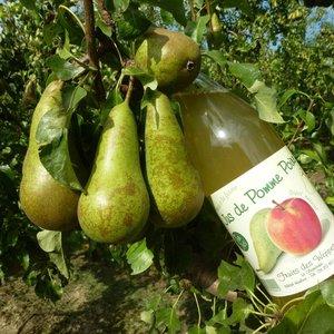 Producteur  Bio Fruits des Weppes