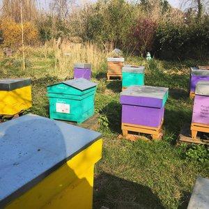 Les mures ont des abeilles, apiculteur à Saint-André-Lez-Lille