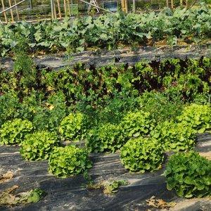 Le jardin de Cocagne à Villeneuve-d'Ascq