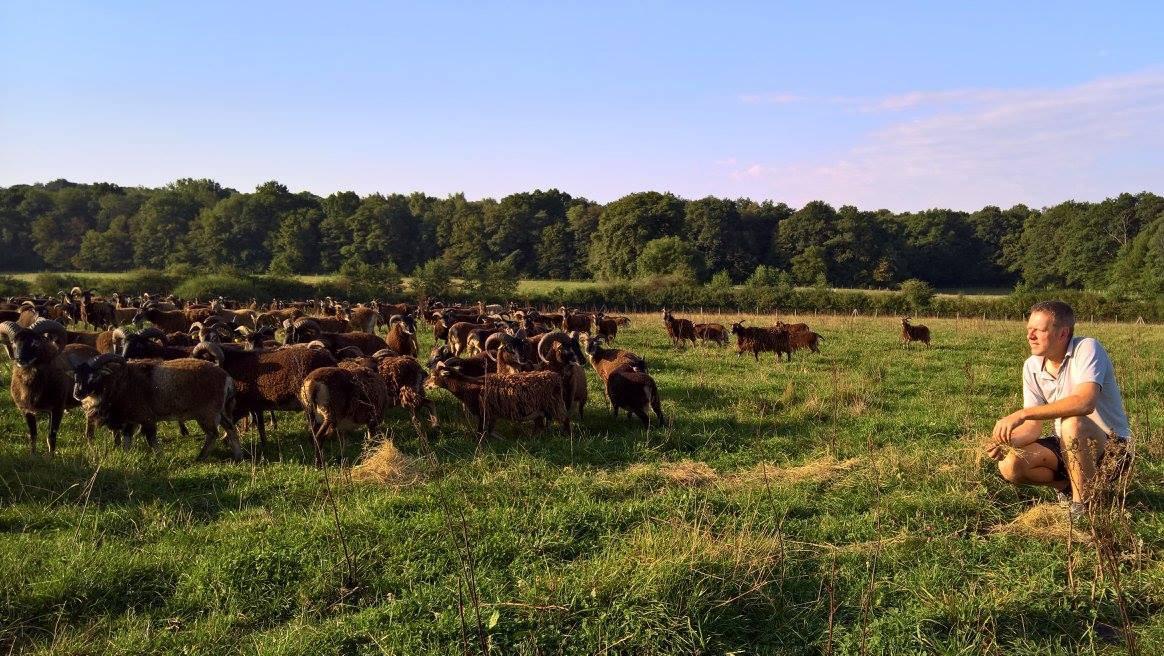 Grégory Delassus et ses moutons Soay de la Ferme du Beau Pays